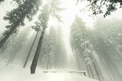 Tourist path covered with snow in the forest in a foggy day. Stock Images