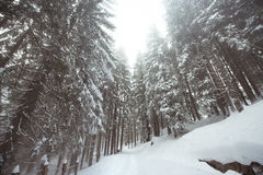 Tourist path covered with snow in the forest. Stock Images