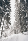 Tourist path covered with snow in the forest. Royalty Free Stock Image