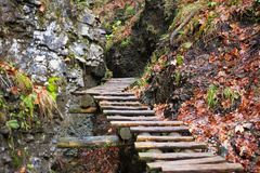Tourist path made from wooden ladders between cliffs in Slovakia stock photo