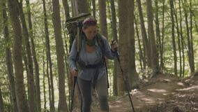 Tourist people hiking in forest at summer vacations. Climbing and trekking stock video footage