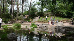 Tourist people take photos near pond and plants in park stock video footage