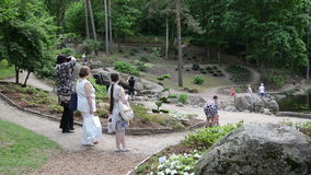 Tourist photo various species decorative plants and fountain stock video footage