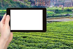 tourist photograph tea field in Chengyang Stock Photography
