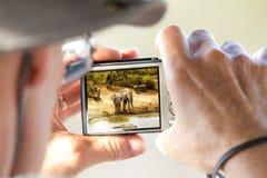 Tourist Photographing African Safari Scene Stock Image