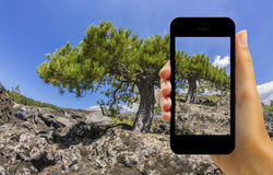 Tourist photographing eruption on Volcano Etna with smartphone Royalty Free Stock Photo