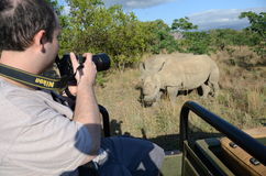 Tourist photographing pair of protected rhinoceros Stock Photography