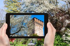 Tourist photographs blossoming tree in Vicenza. Travel concept - tourist photographs blossoming tree and tower Torrione di Porta Castello in urban public park Stock Image