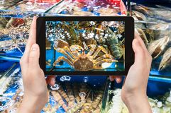 Tourist photographs crab on fish market in China. Travel concept - tourist photographs crab on Huangsha Aquatic Product Trading Market in Guangzhou city in China Stock Photography