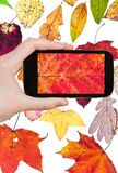 Tourist photographs of fallen autumn leaves Stock Photos