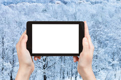 Tourist photographs frozen forest in winter Royalty Free Stock Image