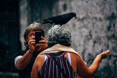 A tourist with a pigeon posses for the camera in Havana, Cuba. royalty free stock photos