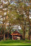 Tourist resort in a woods of Africa Stock Image