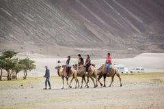 Tourist ride carmels at Hunder village in Nubra Valley. Stock Photos