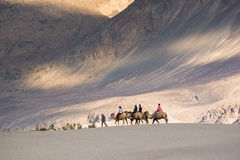 Tourist ride carmels at Hunder village in Nubra Valley. Royalty Free Stock Photography