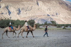 Tourist ride carmels at Hunder village in Nubra Valley. Royalty Free Stock Photo