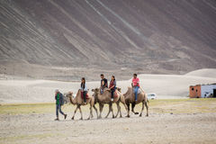 Tourist ride carmels at Hunder village in Nubra Valley. Royalty Free Stock Image