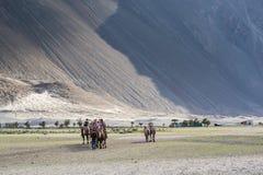 Tourist ride carmels at Hunder village in Nubra Valley. Stock Image