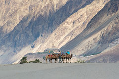 Tourist ride carmels at Hunder village in Nubra Valley. Stock Photography