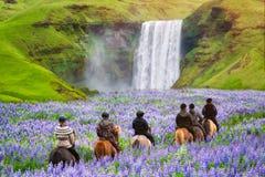 Tourist ride horse at Skogafoss waterfall Iceland