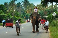 Tourist riding an elephant Stock Image