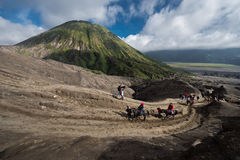 Tourist riding horse to Bromo Stock Images