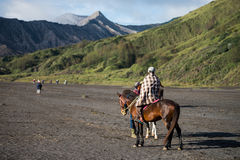 Tourist riding horse walking Royalty Free Stock Photos