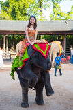 Tourist riding on young elephant Stock Photo