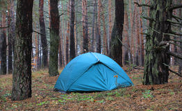 Tourist's tent in forest Royalty Free Stock Photography
