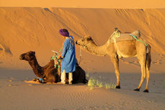 Tourist safari on camels in desert royalty free stock photo
