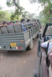 Tourist Safari jeeps in Ranthambhore forest reserve park. School children visitor vehicles drive on rough terrain road inside Ranthambhore tiger safari national stock image