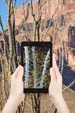 Tourist shooting photo of cactus in Grand Canyon Stock Photo