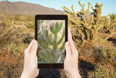Tourist shooting photo of cactus in Mohave Desert Stock Image