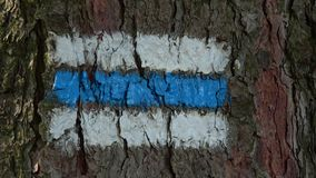 Tourist sign on the tree bark. Colorful tourist sign or mark on tree for hiking tourism in a forest stock video footage