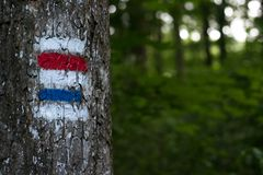 Tourist sign on a tree Stock Photos
