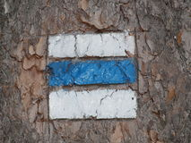 Tourist signposting on the bark of a tree Royalty Free Stock Images