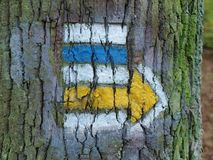 Tourist signposting on the bark of a tree Royalty Free Stock Photography