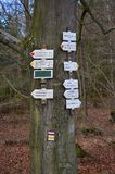 Tourist signposting on the bark of a tree Royalty Free Stock Photos