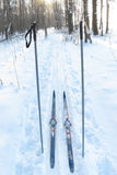 Tourist skis and ski poles Royalty Free Stock Image