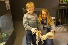 Tourist with snake at oslo reptile museum stock images