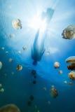 Tourist snorkeling in Jellyfish Lake Royalty Free Stock Photos