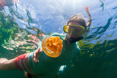 Tourist snorkeling in Jellyfish Lake Royalty Free Stock Photo