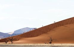 Tourist in the Sossusvlei desert, Namibia Stock Photography