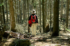 Tourist standing in forest Royalty Free Stock Photography