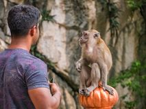 Tourist Starring to Monkey Batu Caves, Malaysia. Hold his smartphone very tight to prevent stealing from the Monkey Stock Photo