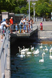 Tourist with swan,Zurich Royalty Free Stock Images