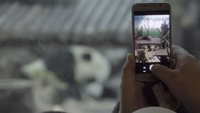Tourist takes a cell phone picture of a Panda. Tourist takes a cell phone technology picture of a Panda stock footage