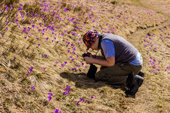 Tourist takes photos of crocuses Royalty Free Stock Images