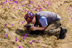 Tourist takes photos of crocuses Royalty Free Stock Photos