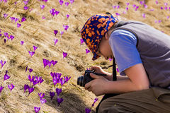 Tourist takes photos of crocuses Stock Photos